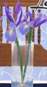 Cover 2 Iris crop