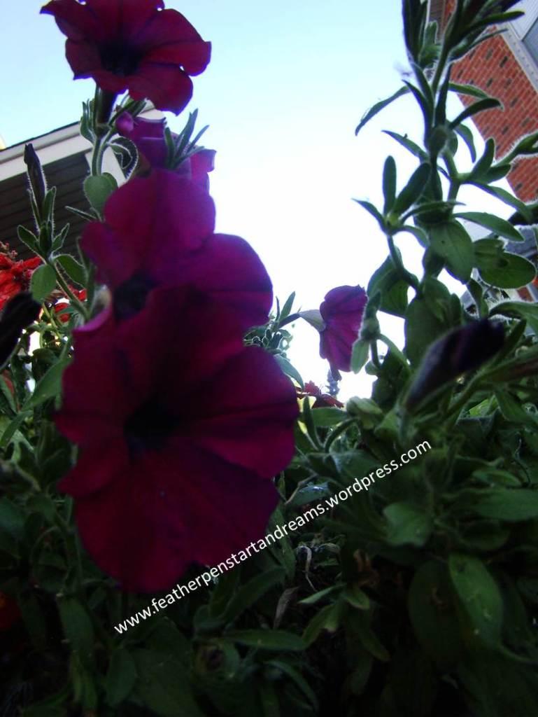 June Flowers1